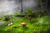 Mushroom unknown species in a pine forest on floor covered in moss. The scene is surrounded by fog.
