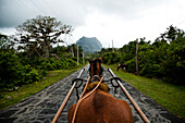 A horse and carriage travel on a back road in Vinales, Cuba.