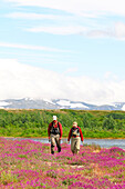 An angler, and her guide, walk through fireweed to their next destination on the banks of the Kulik River, Kulik, Alaska.