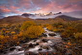 A mountain stream cascades through layers of Autumn foliage leading the way towards Oregon's Steens Mountain.  Cottonwoods, Willows and Rabbitbrush in vibrant gold colors compliment rich sunrise skies and mist clearing from the mountains above.