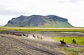 Wild horses running, South Iceland, Iceland, Polar Regions
