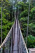 Canopy walkway at Atta Rainforest Lodge near Iwokrama, Guyana, South America