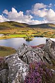 Llynnau Cregennen and Cadair Idris in autumn, Snowdonia National Park, Wales, United Kingdom, Europe