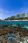 Above and below view of coral reef and sandy beach on Jaco Island, Timor Sea, East Timor, Southeast Asia, Asia