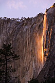 Afternoon light on Horsetail Falls, an occurence that happens once or twice a year in late February due to the angle of the sun and snow melt on the cliffs, Yosemite Valley, Yosemite National Park, UNESCO World Heritage Site, California, United States of