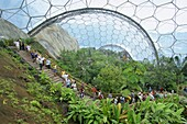 Inside the Humid Tropics biome at the Eden project, opened in 2001 at a china clay pit near St. Austell, Cornwall, England, United Kingdom, Europe
