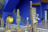 Cacti in the Majorelle Garden, created by the French cabinetmaker Louis Majorelle, and restored by the couturier Yves Saint-Laurent, Marrakesh, Morocco, North Africa, Africa