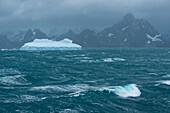 Stormy seas with iceberg and mountains on the coast, Drygalski Fjord, South Georgia Island, Antarctica