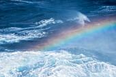 Rainbow in sea spray during rough seas, between South Georgia Island and Elephant Island, South Shetland Islands, Antarctica