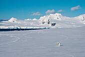 Ein Zügelpinguin (Pygoscelis antarctica) vor Bergkulisse, Half Moon Island, Südshetland-Inseln, Antarktis