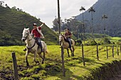 Boys horse riding in Cocora Valley, Salento, Colombia, South America