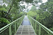 Canopy Walkway, Sepilok Rainforest Discovery Center, Sabah, Borneo, Malaysia, Southeast Asia, Asia