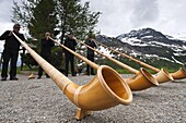 Men playing alpenhorn or alpine horn, Switzerland, Europe