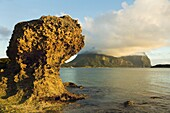 Eroded calcarenite rock (cemented coral sands) with Mount Lidgbird and Mount Gower by the lagoon with the world's most southerly coral reef, on this 10km long volcanic island in the Tasman Sea, Lord Howe Island, UNESCO World Heritage Site, New South Wales