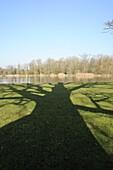 Shadow cast by large English Oak tree (Quercus robur) on grassy margins of ornamental lake, Corsham, Wiltshire, England, United Kingdom, Europe