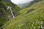 Alpine meadow, Venter Tal near Vent, Otztal valley, Tyrol, Austria, Europe