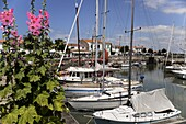 Hollyhocks on the quayside, Ars-en-Re, Ile de Re, Charente Maritime, France, Europe