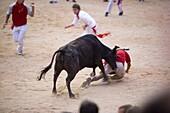 Bull fighting, San Fermin festival, Plaza de Toros, Pamplona, Navarra, Spain, Europe