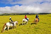 Horseback riding at Parker Ranch, The Big Island, Hawaii, United States of America, North America