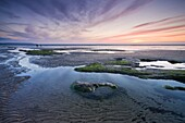 Rockpools at low tide in Westward Ho!,  Devon,  England,  United Kingdom,  Europe