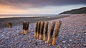 Weathered wooden coastal defenses on Bossington Beach, Exmoor National Park, Somerset, England, United Kingdom, Europe