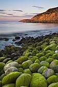 Algae covered rocks at sunrise at Church Ope Cove, Portland, Jurassic Coast, UNESCO World Heritage Site, Dorset, England, United Kingdom, Europe