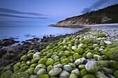 Algae covered pebbles at Church Ope Cove at dawn Portland, Jurassic Coast, UNESCO World Heritage Site, Dorset, England, United Kingdom, Europe