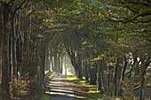 Autumnal tree lined lane, Dartmoor, Devon, England, United Kingdom, Europe