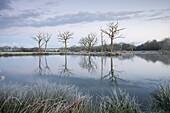 Frosty winter scene beside a still lake, Morchard Road, Devon, England, United Kingdom, Europe