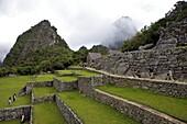 Agricultural terraces, Machu Picchu, peru, peruvian, south america, south american, latin america, latin american South America. The lost city of the Inca was rediscovered by Hiram Bingham in 1911