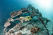 Coral encrusted biosphere in the marine reserve at Gangga Island, Sulawesi, Indonesia, Southeast Asia, Asia