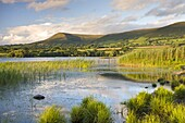 Mynydd Troed mountain from the sunlit shores of Llangorse Lake, Brecon Beacons National Park, Powys, Wales, United Kingdom, Europe