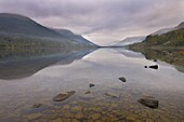 Misty autumn morning on the shores of Loch Voil, The Trossachs, Stirling, Scotland, United Kingdom, Europe