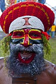 Colourfully dressed and face painted local tribesman celebrating the traditional Sing Sing in the Highlands, Papua New Guinea, Pacific