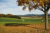 Rural autumn scene with Lauffen village, near Villingen-Schwenningen, Black Forest, Schwarzwald-Baar, Baden-Wurttemberg, Germany, Europe