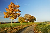 Rural autumn scene, near Villingen-Schwenningen, Black Forest, Schwarzwald-Baar, Baden-Wurttemberg, Germany, Europe