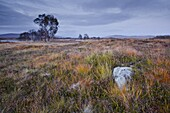 The area of Rannoch Moor, a Site of Special Scientific Interest, Highlands, Scotland, United Kingdom, Europe