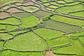 terraces with stone walls securing agriculture fields, Faja Grande, Island of Flores, Azores, Portugal, Europe, Atlantic Ocean