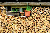 Stack of wood and fresh herbs in front of alpine hut, Chiemgau Alps, Upper Bavaria, Bavaria, Germany