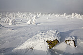 Brocken Winterschnee, eisig kalt, Harz, schneeueberzogene Baeume, windgebeugt, Landschaft, Niedersachsen, Deutschland