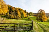 Feld, Tor, Holzzaun, Huegel, Herbst, Mischwald, Landwirtschaft, lieblich, idyllisch, laendlich, Niedersachsen, Deutschland