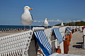 Seagulls on the beach in Kuehlungsborn, Baltic Sea Coast, Mecklenburg Western Pomerania, Germany