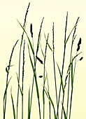 Close-up of grasses