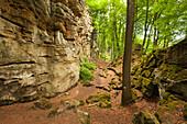 Teufelsschlucht, nature park Suedeifel, Eifel, Rhineland-Palatinate, Germany