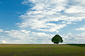 Field on Ferschweiler Plateau, nature park Suedeifel, Eifel, Rhineland-Palatinate, Germany