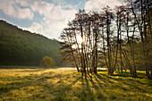 Eschbach valley, near Virneburg, Eifel, Rhineland-Palatinate, Germany