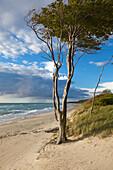 Western beach, Darss, National Park Vorpommersche Boddenlandschaft, Baltic Sea, Mecklenburg-West Pomerania, Germany