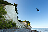 Chalk cliff, National Park Jasmund, Ruegen island, Baltic Sea, Mecklenburg-West Pomerania, Germany