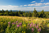 View from Schneekopf hill, nature park Thueringer Wald,  Thuringia, Germany
