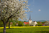 View at Schallfeld - Community of Lülsfeld - with church and blooming apple-tree, Spring, Unterfranken, Bavaria, Germany, Europe